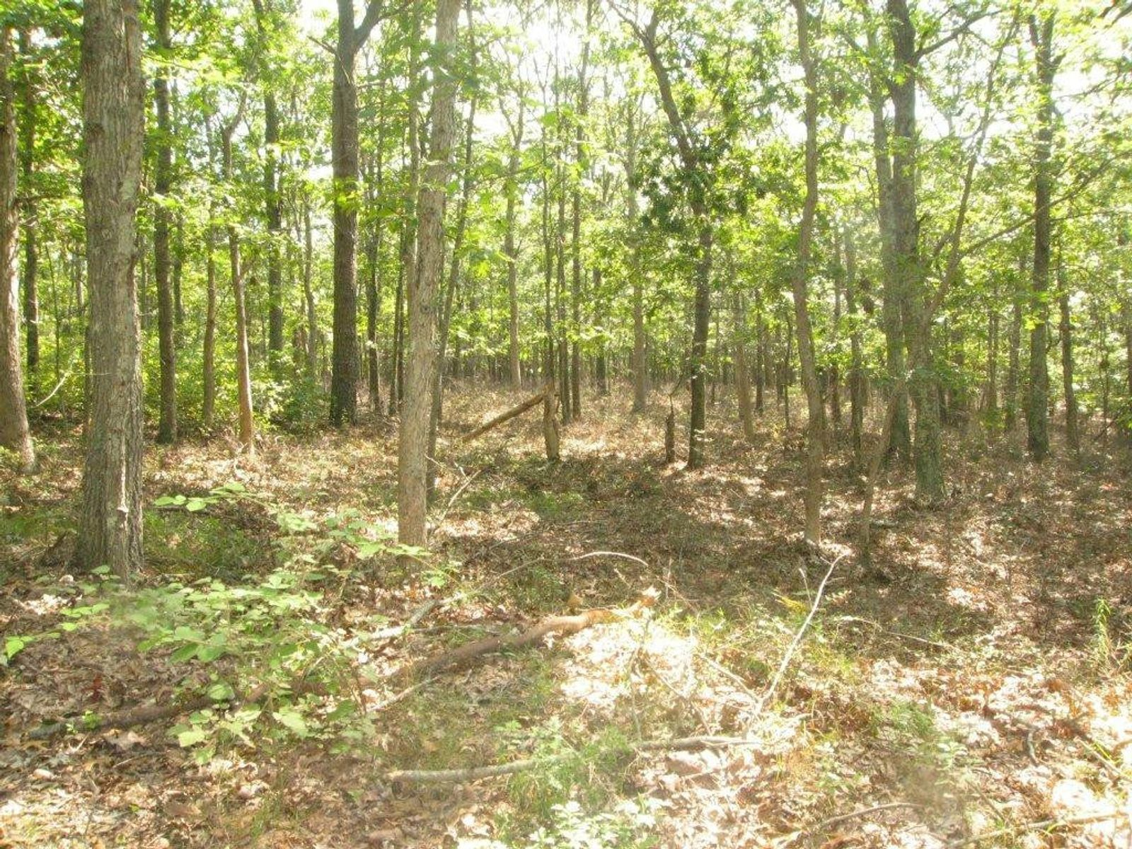 Great Land Opportunity, East Hampton NY Acreage / Lots - Hamptons Real Estate