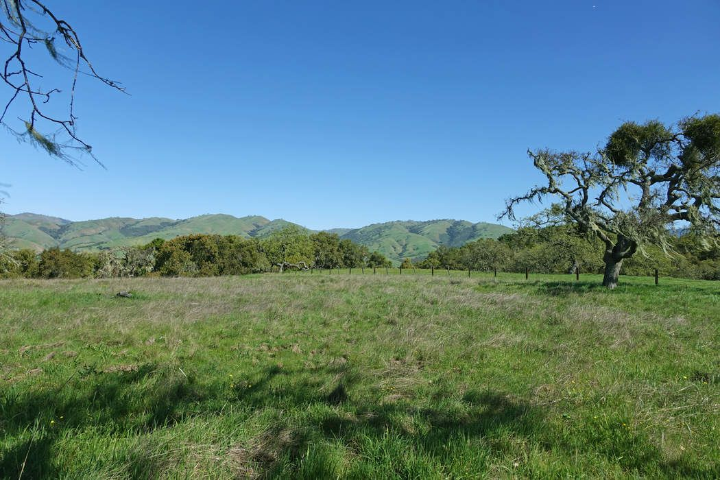 160 Acres with Meadows and Oak Woodlands