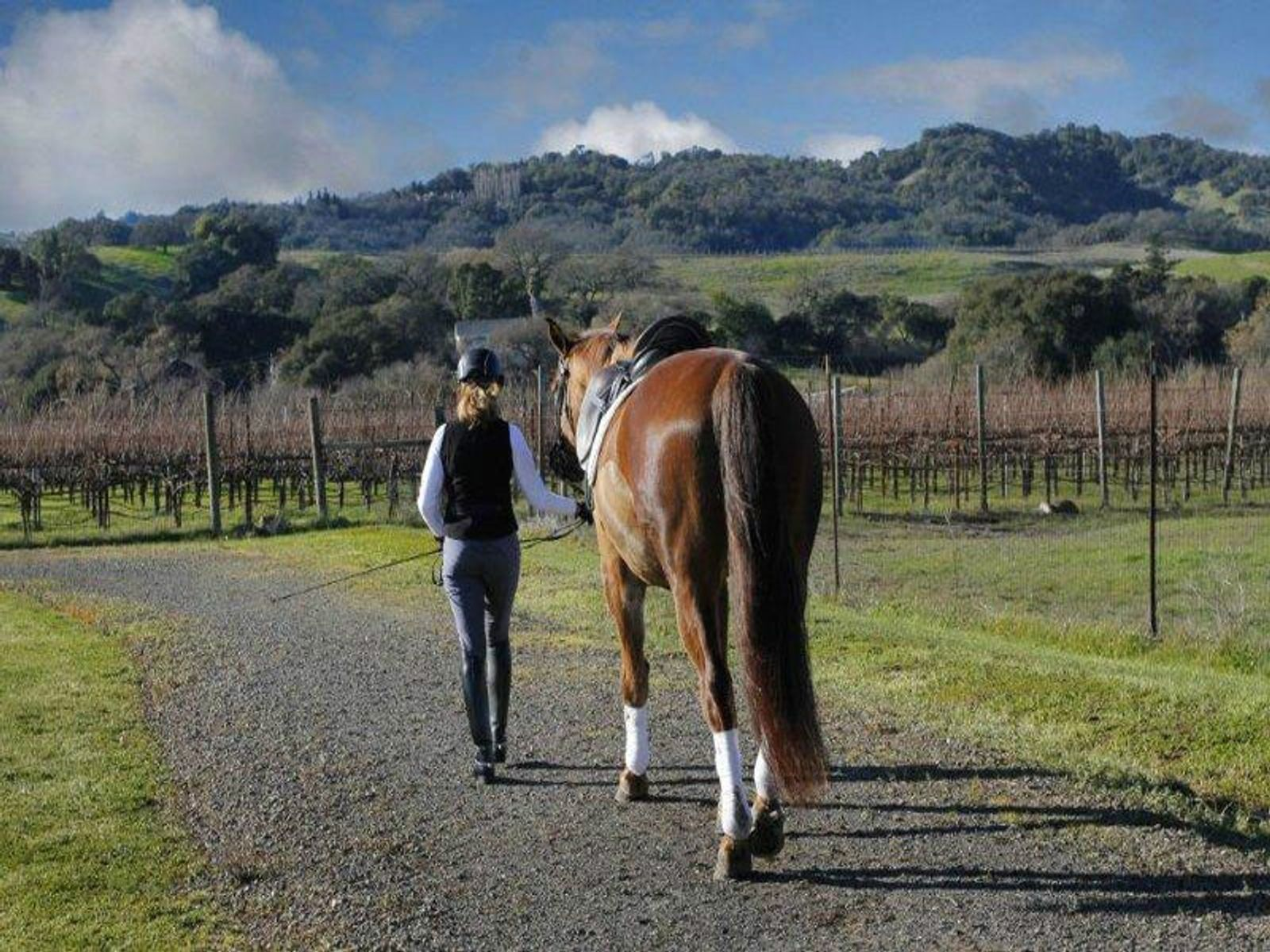 Sonoma Equestrian Estate