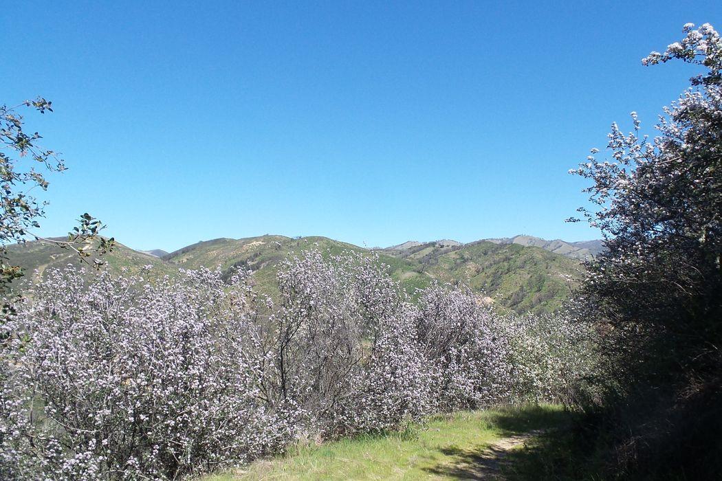 21435 Peroy Ranch Road Carmel Valley, CA 93924