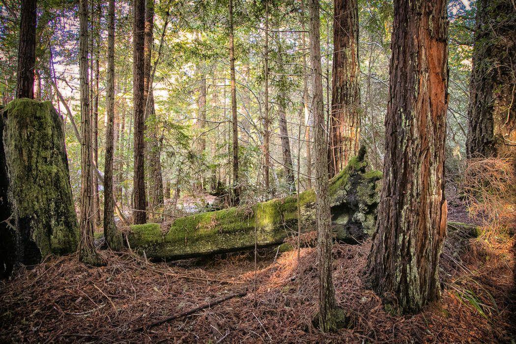 388 Lumberjack Close The Sea Ranch, CA 95497