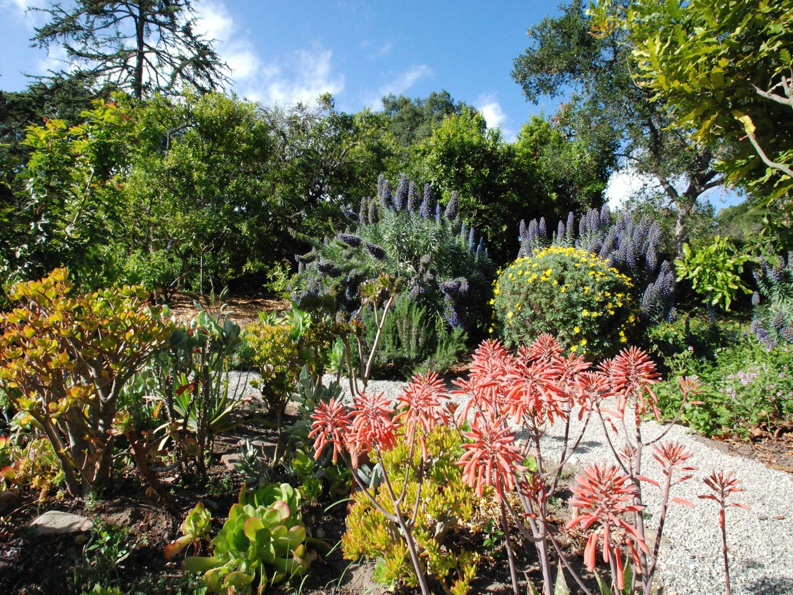1.3 Acres of Mature Gardens and Pathways