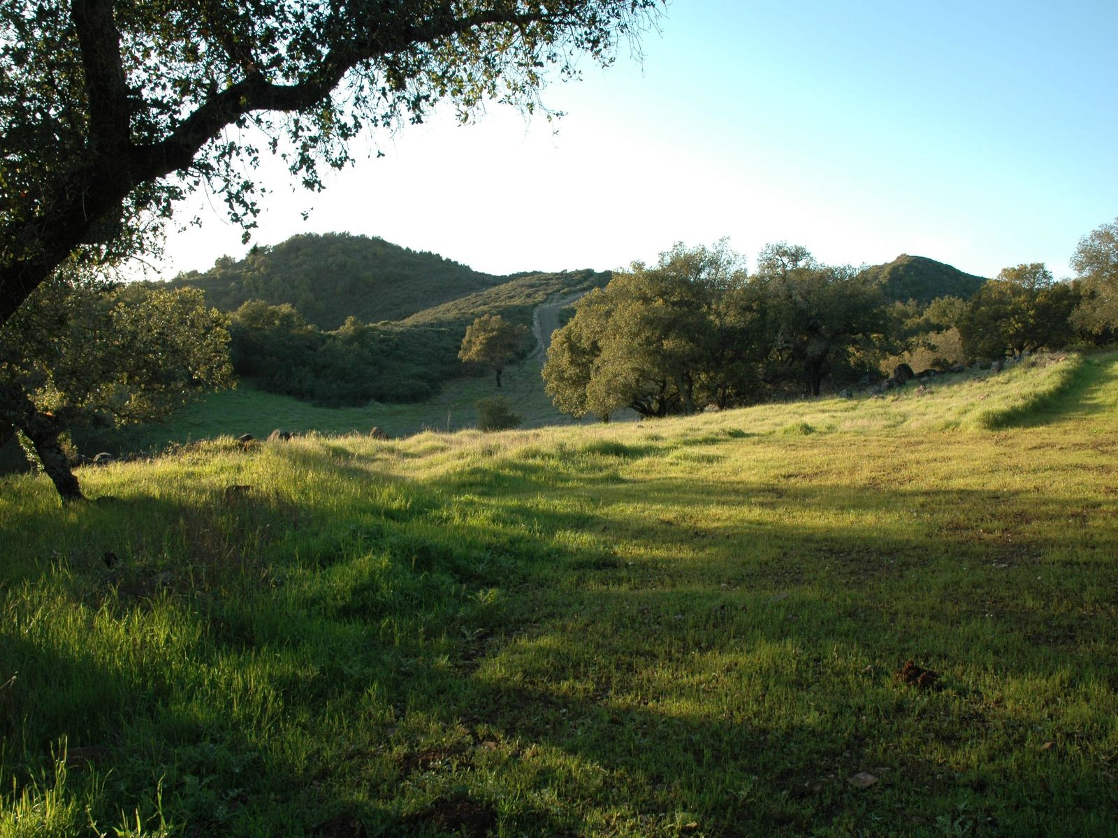 Unsurpassed Eastside Acreage, Sonoma CA Acreage / Lots - Sonoma - Napa Real Estate