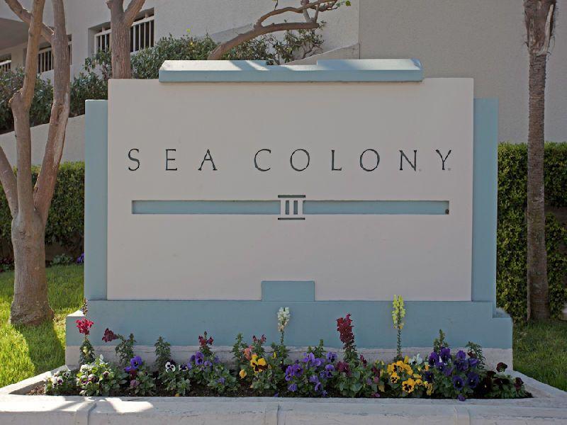 A Sea Colony III