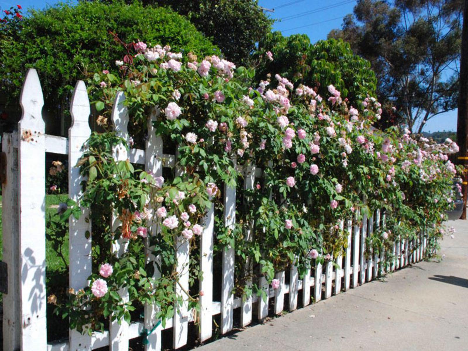 Street Side Picket Fence
