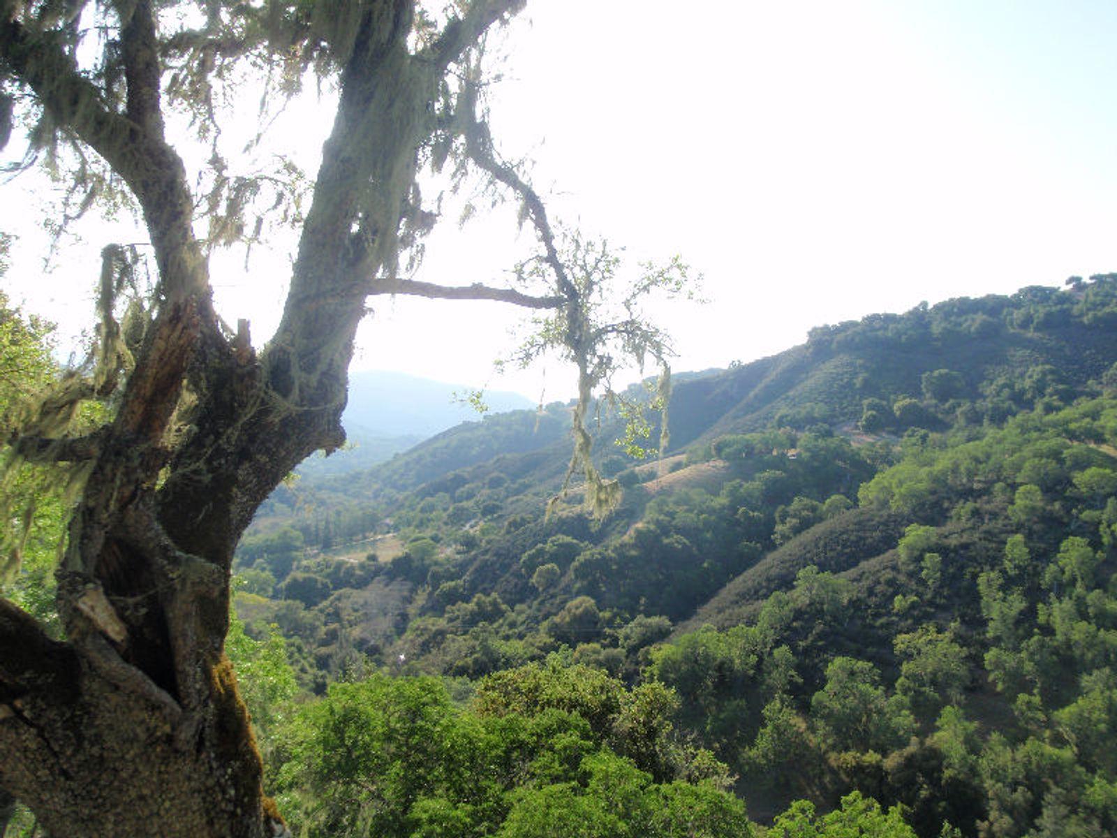 Carmel Valley Land