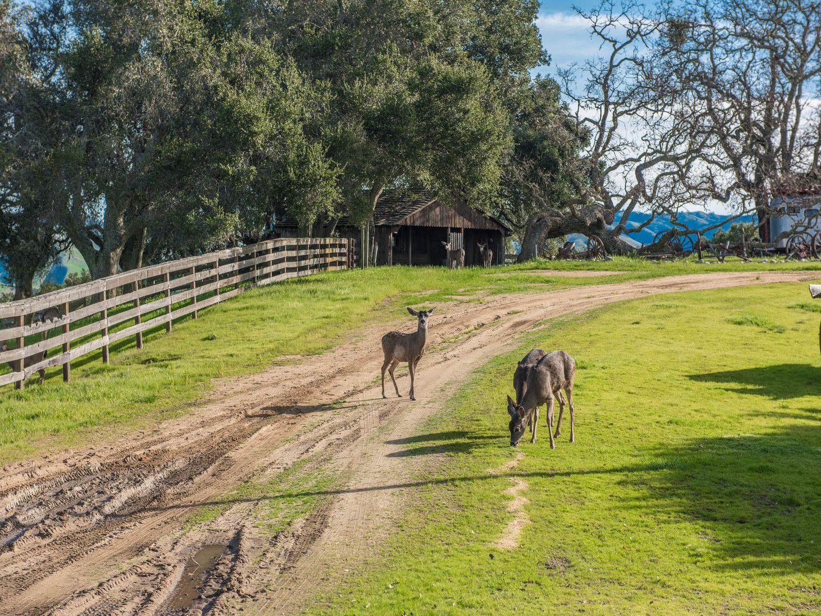 Buck Mountain Ranch- Carmel Valley, CA
