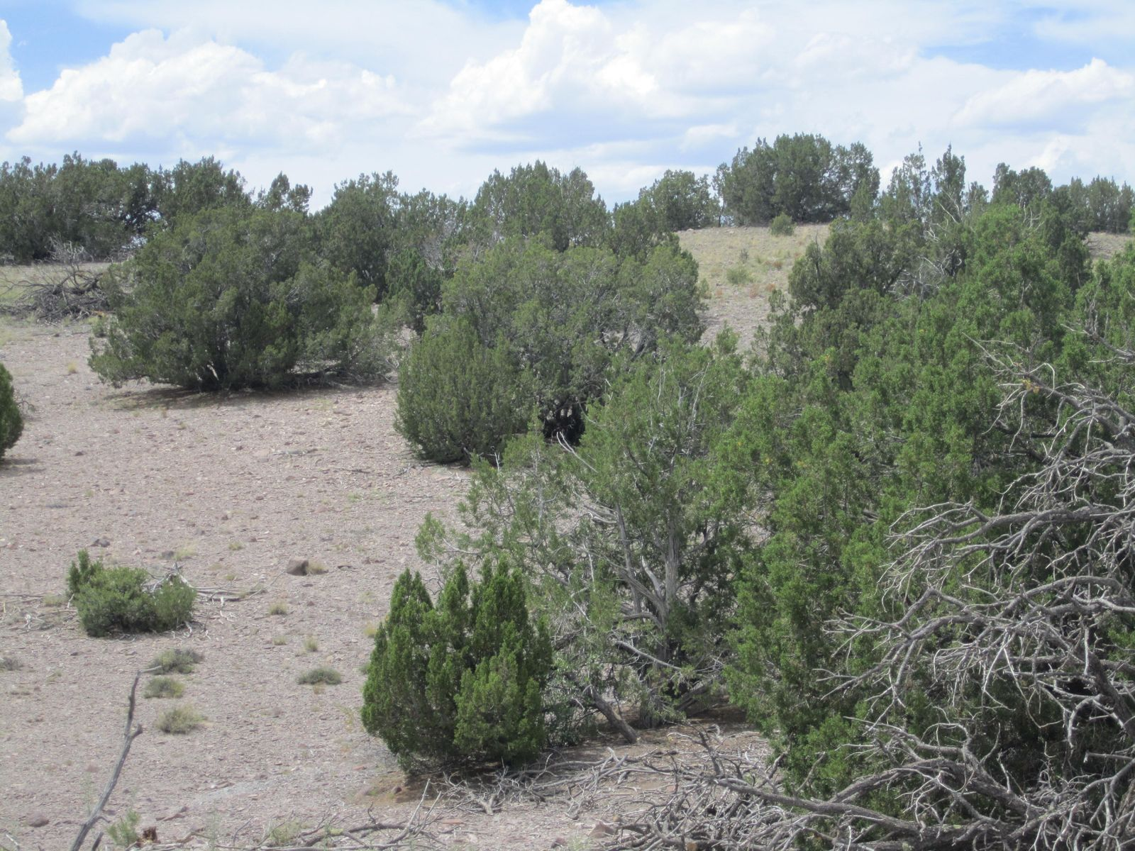 10 El Cerro Trail