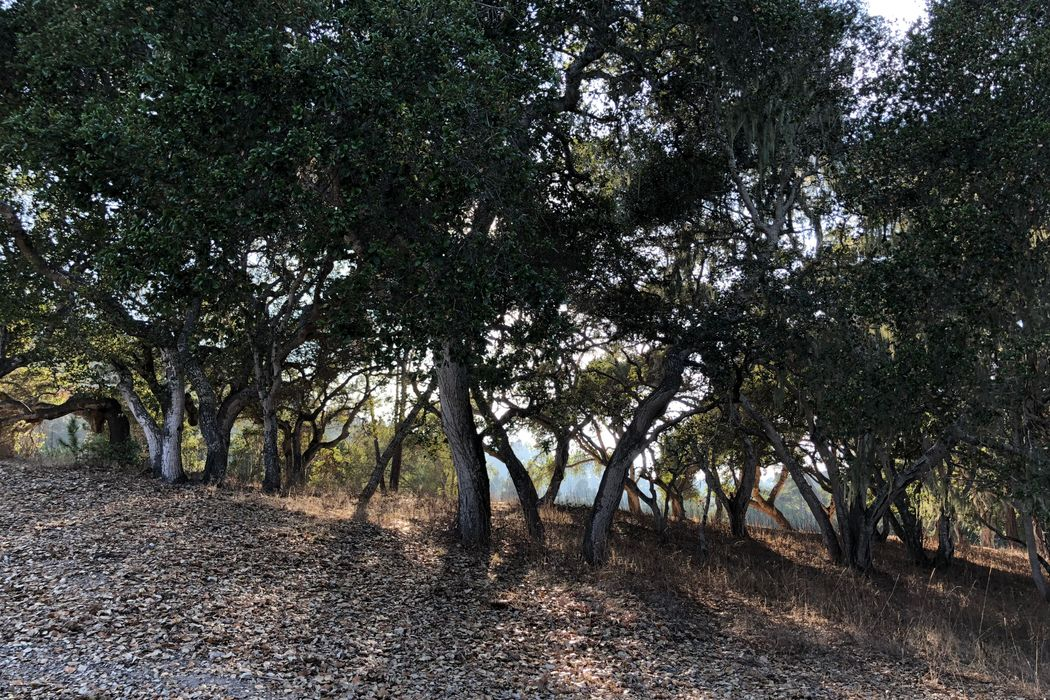 7755 Paseo Venado (Monterra Lot 84) Monterey, CA 93940