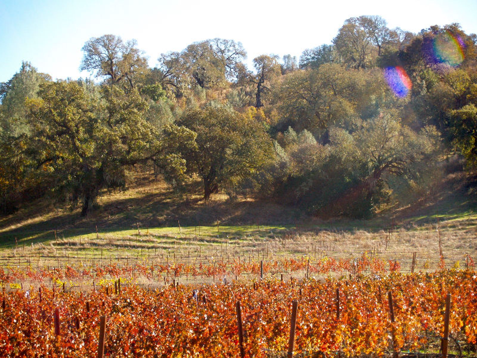St. Helena Winery For Sale