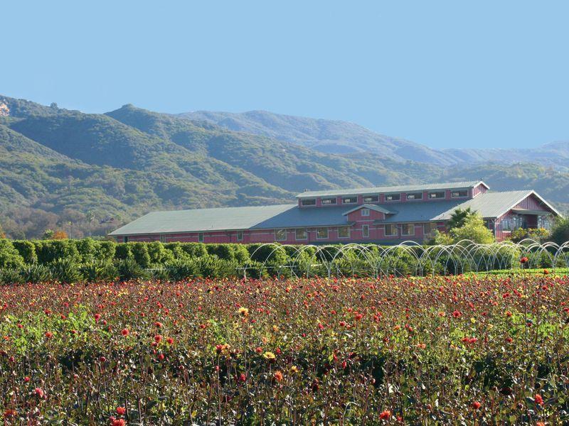 Carpinteria Farm