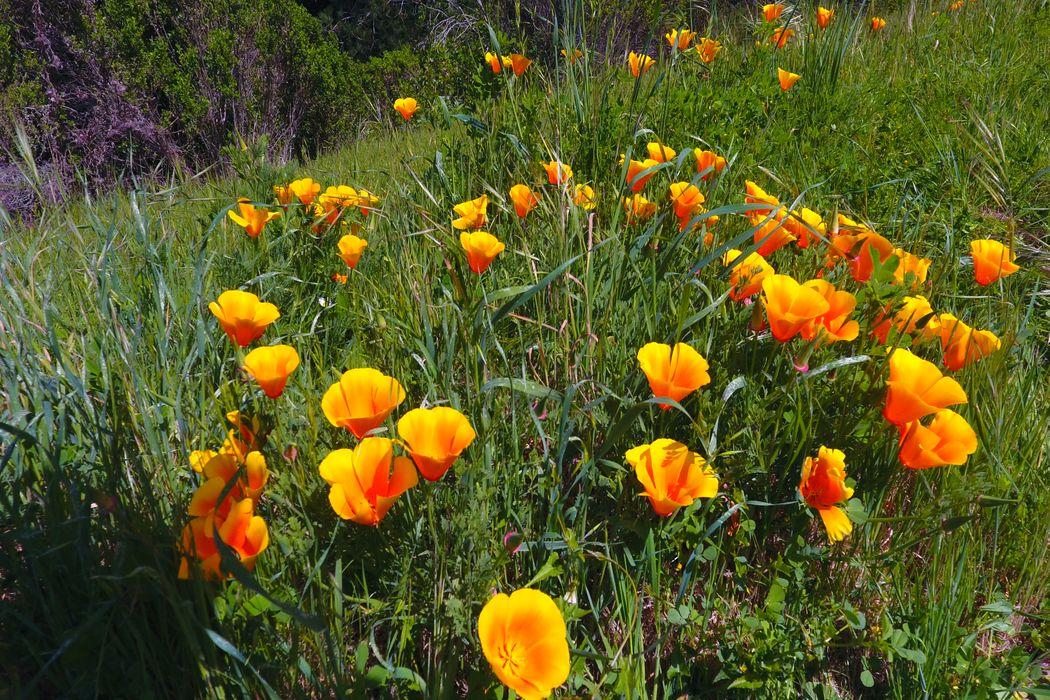 64 Marguerite (Lot 48) Carmel, CA 93923