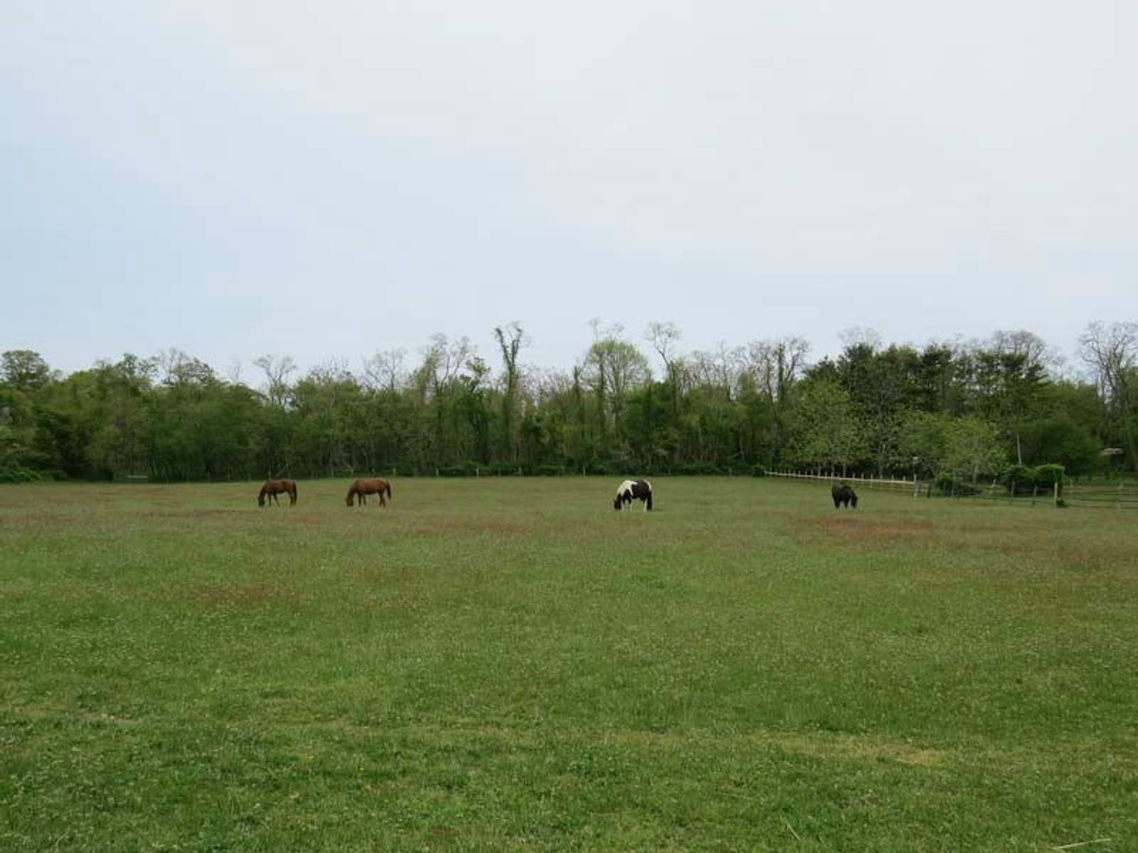 Unique 65+/- Acre Equestrian Property