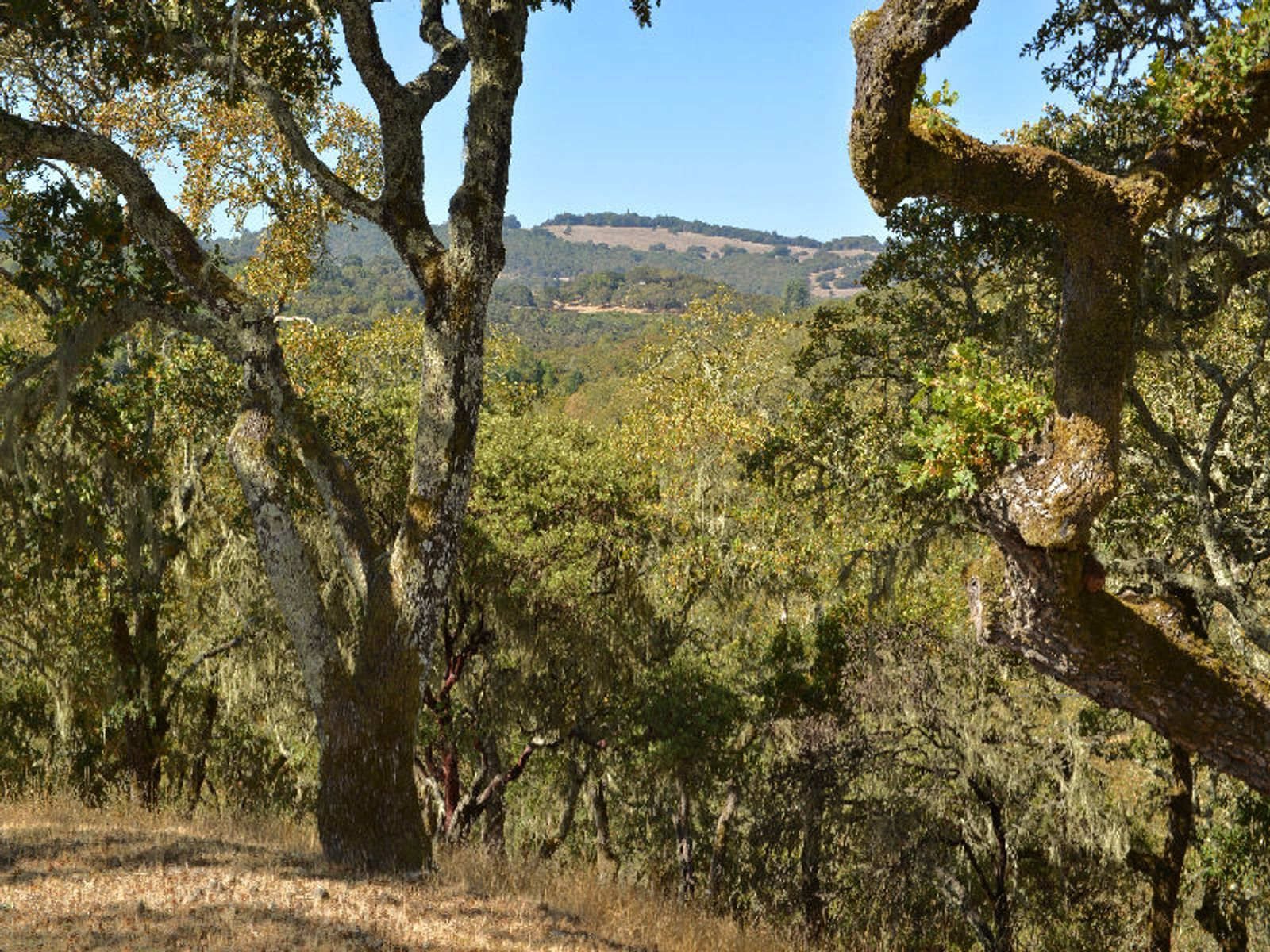 Views of Sonoma Mountain