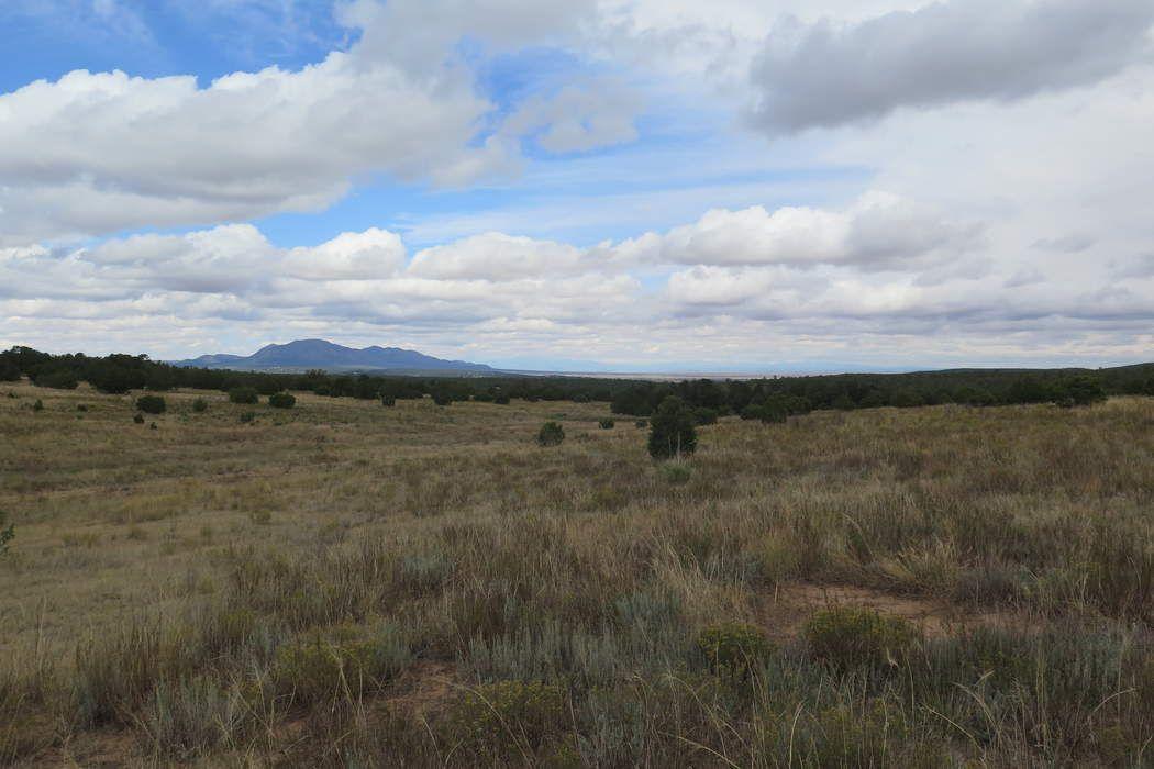 565 Juan Tomas Road Tijeras, NM 87059