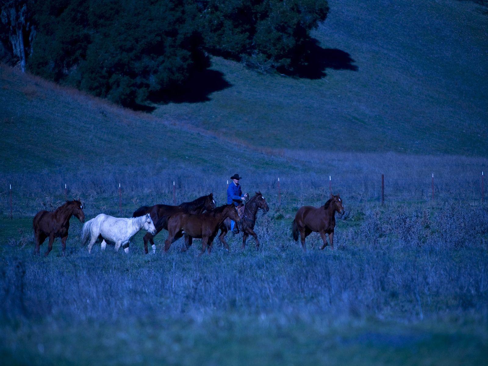 Hearding Horses