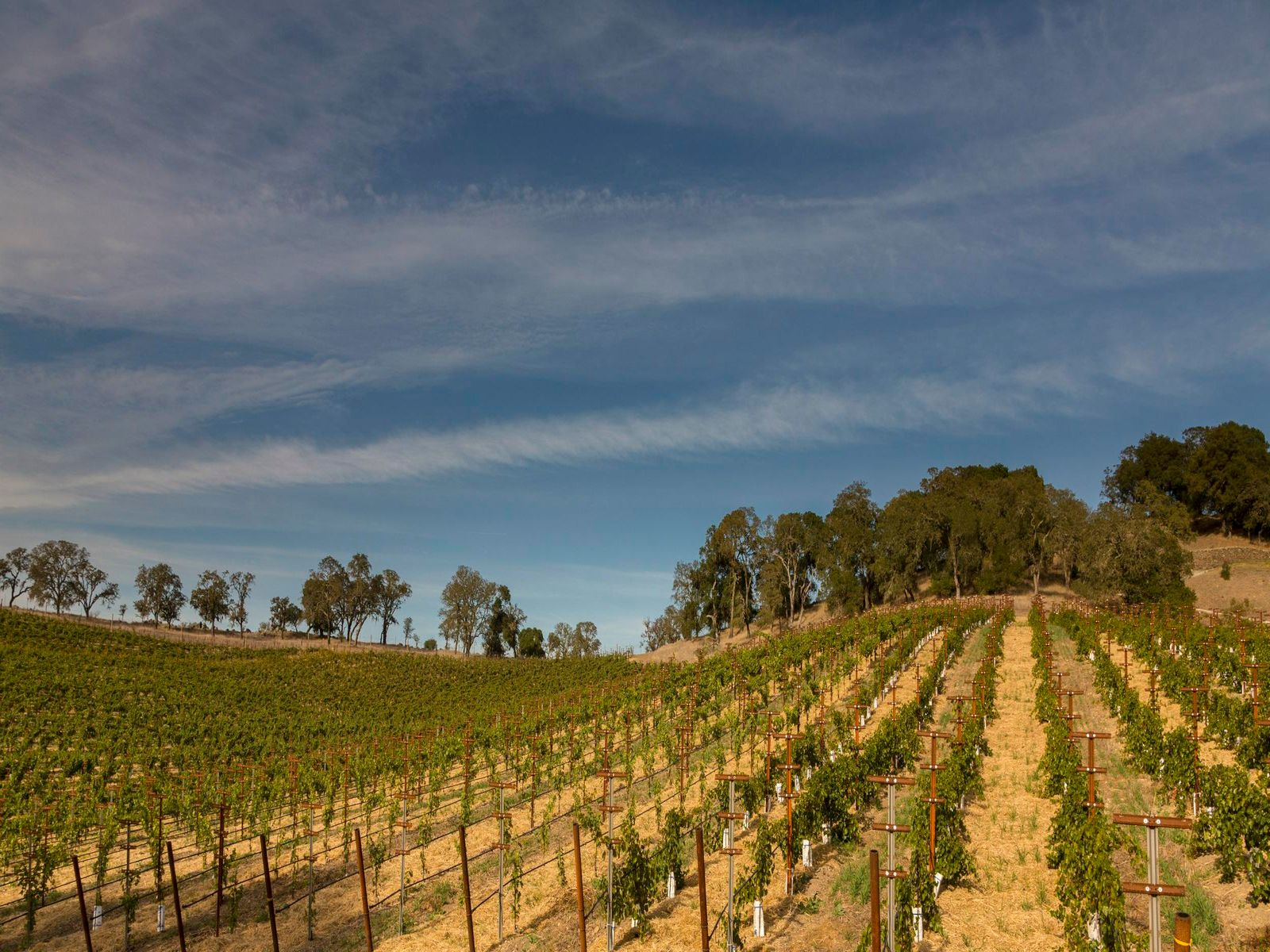World Class Napa Valley Winery for Sale