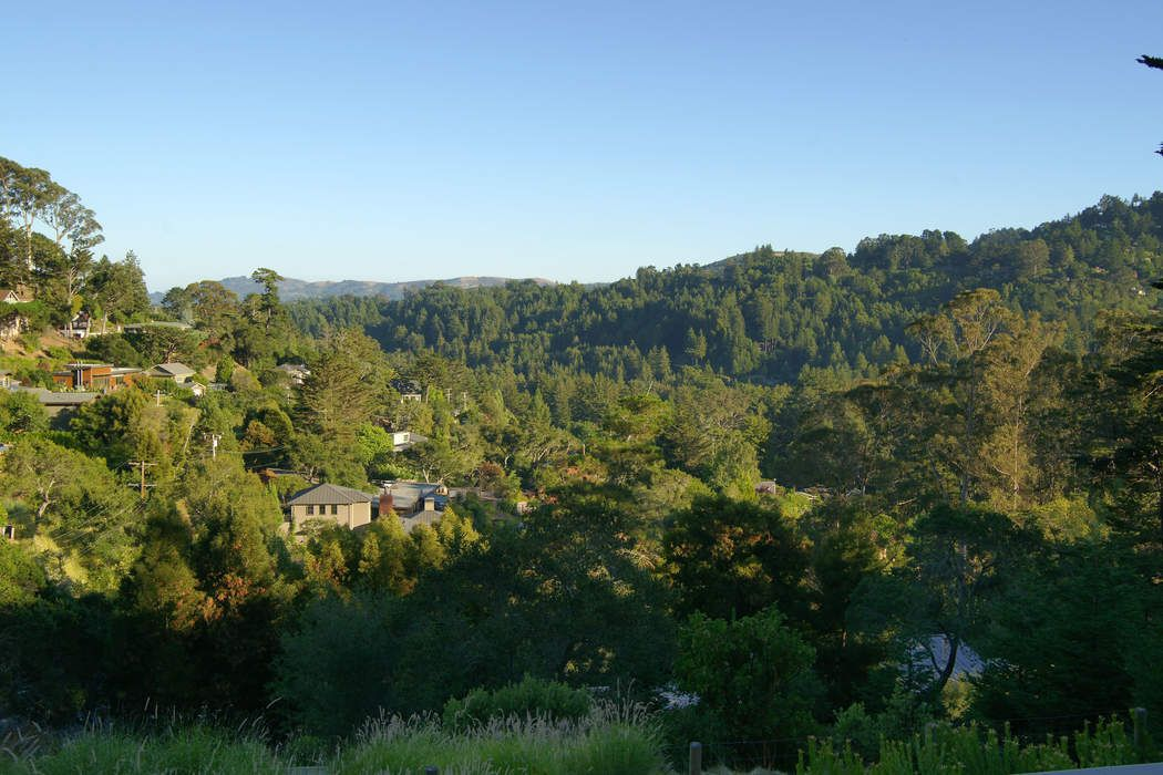 432 Lovell Ave Mill Valley, CA 94941