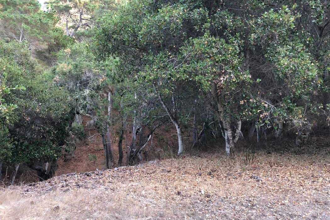 7760 Paseo Venado (Monterra Lot 86) Monterey, CA 93940