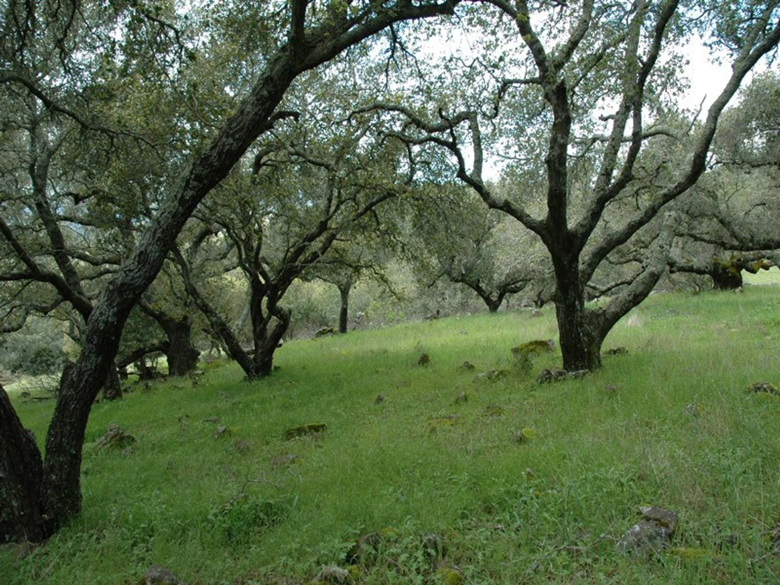 Unsurpassed Eastside Acreage