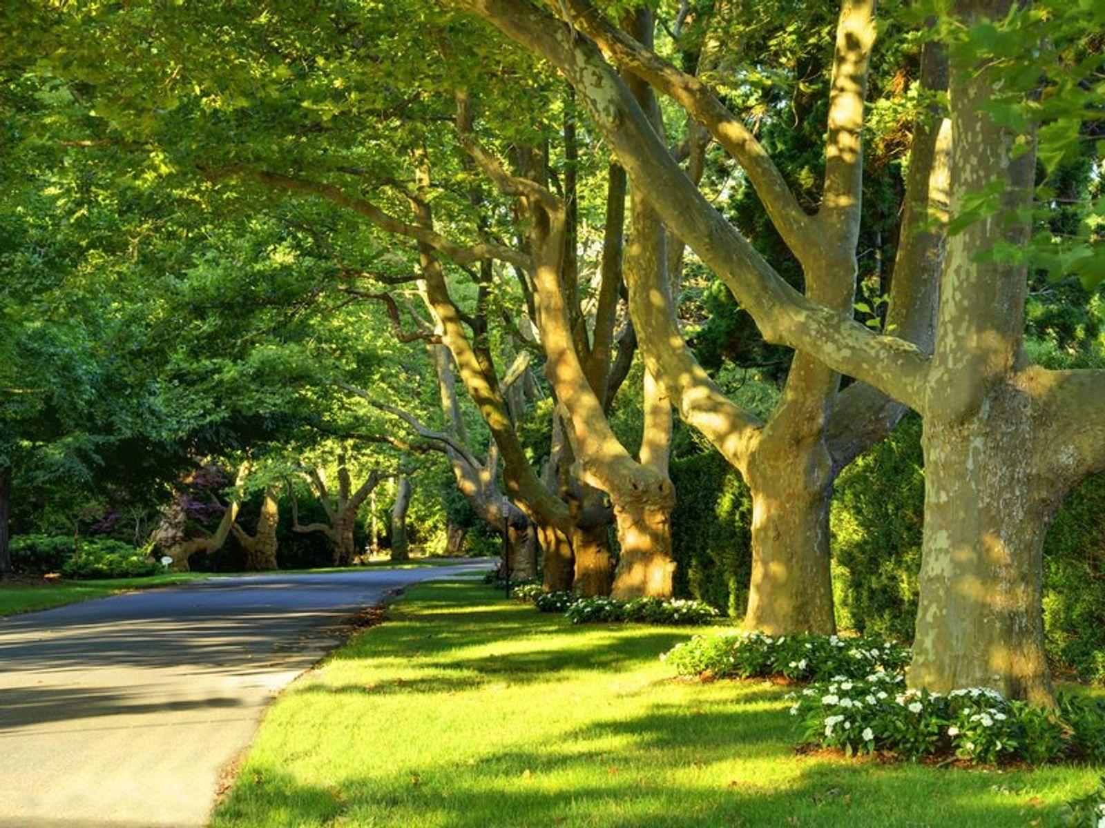 Lily Pond Lane, East Hampton