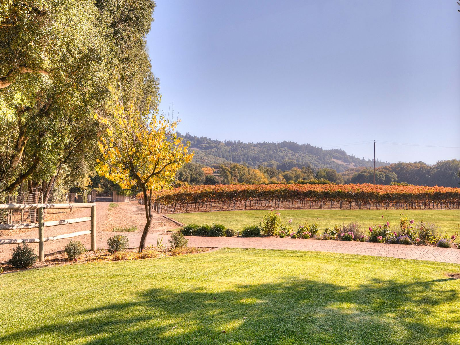 Looking East over approx. 2 ac of Syrah vineyard