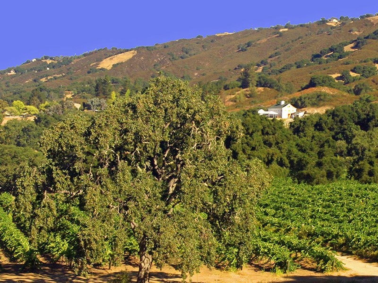 The Fabulous Rancho Galante