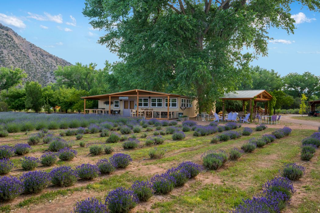 Purple Adobe Lavender Farm Abiuqiu, NM 87510