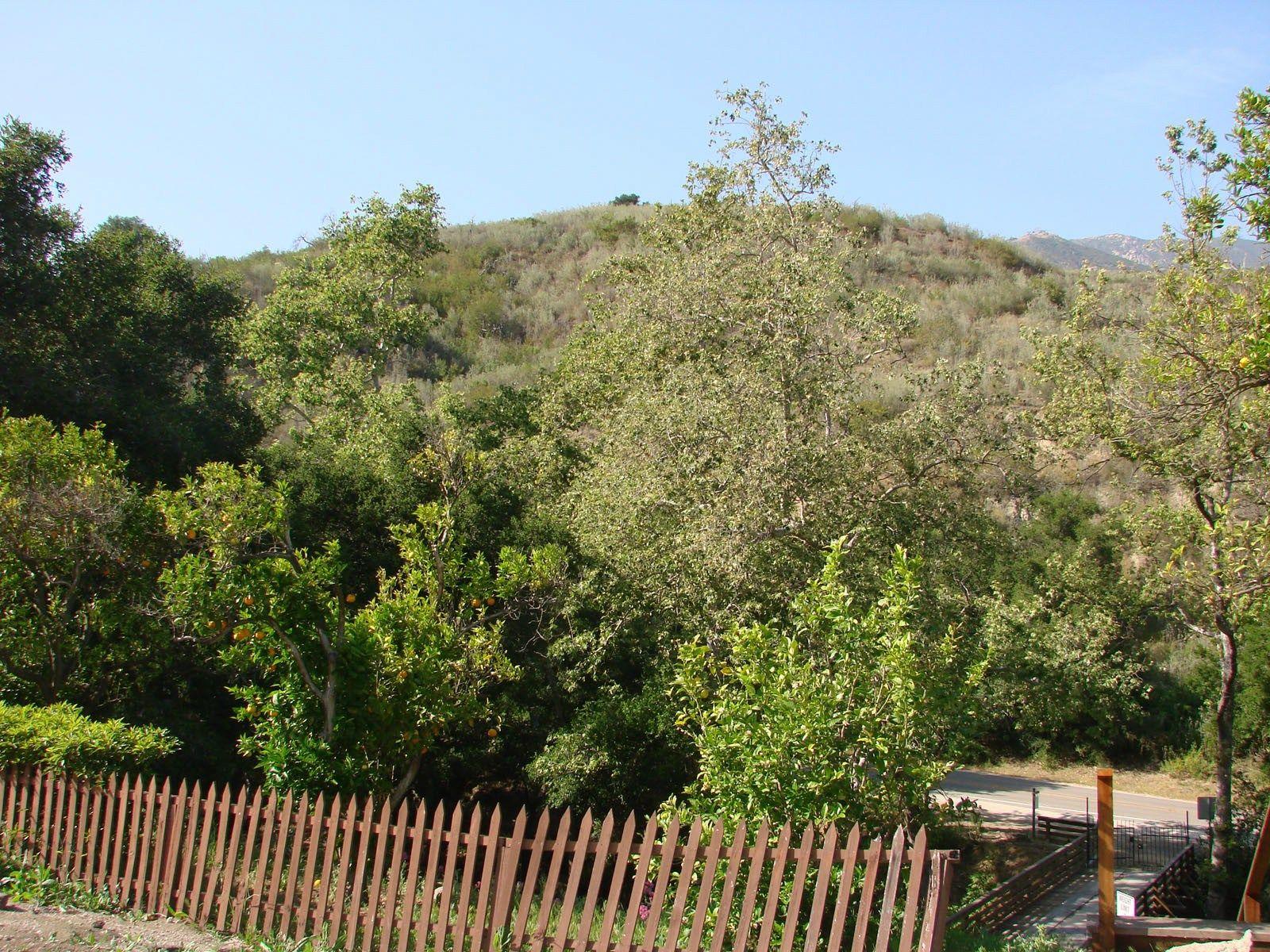 Georgeous Mountain View