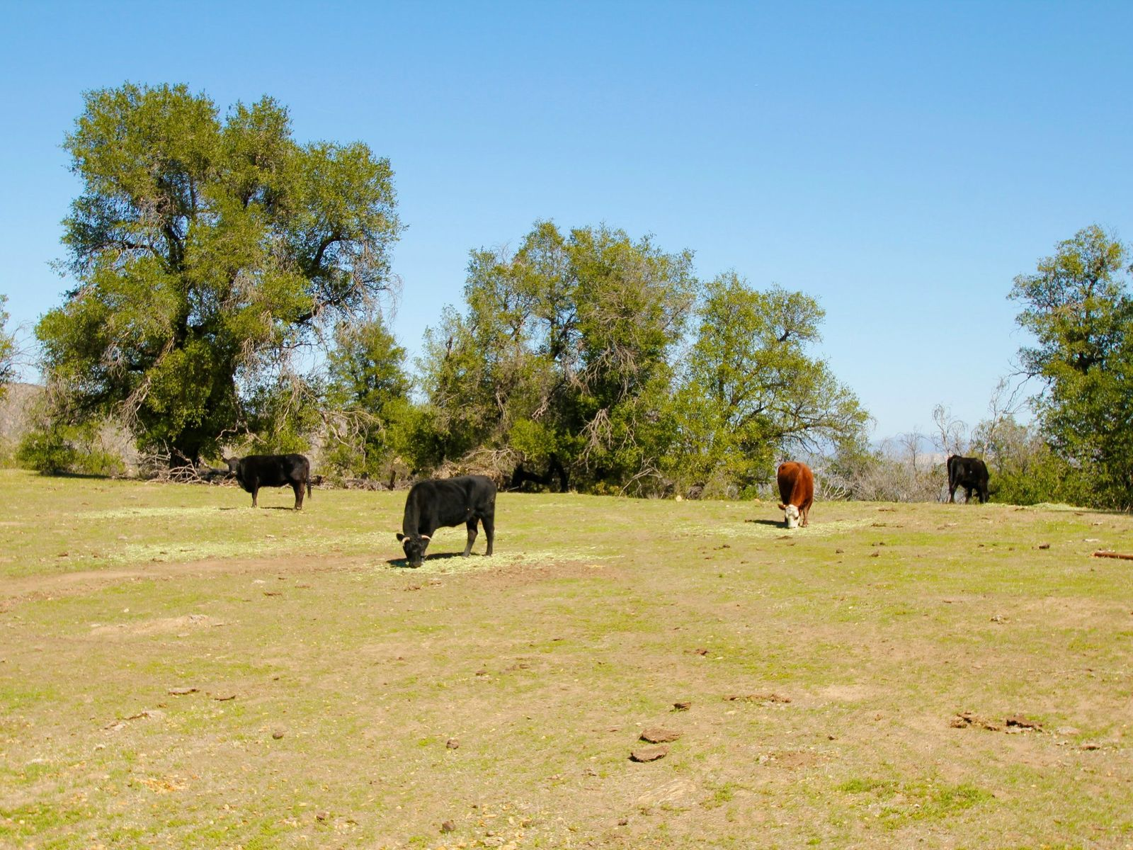 Approx. 200 Acre Ranch