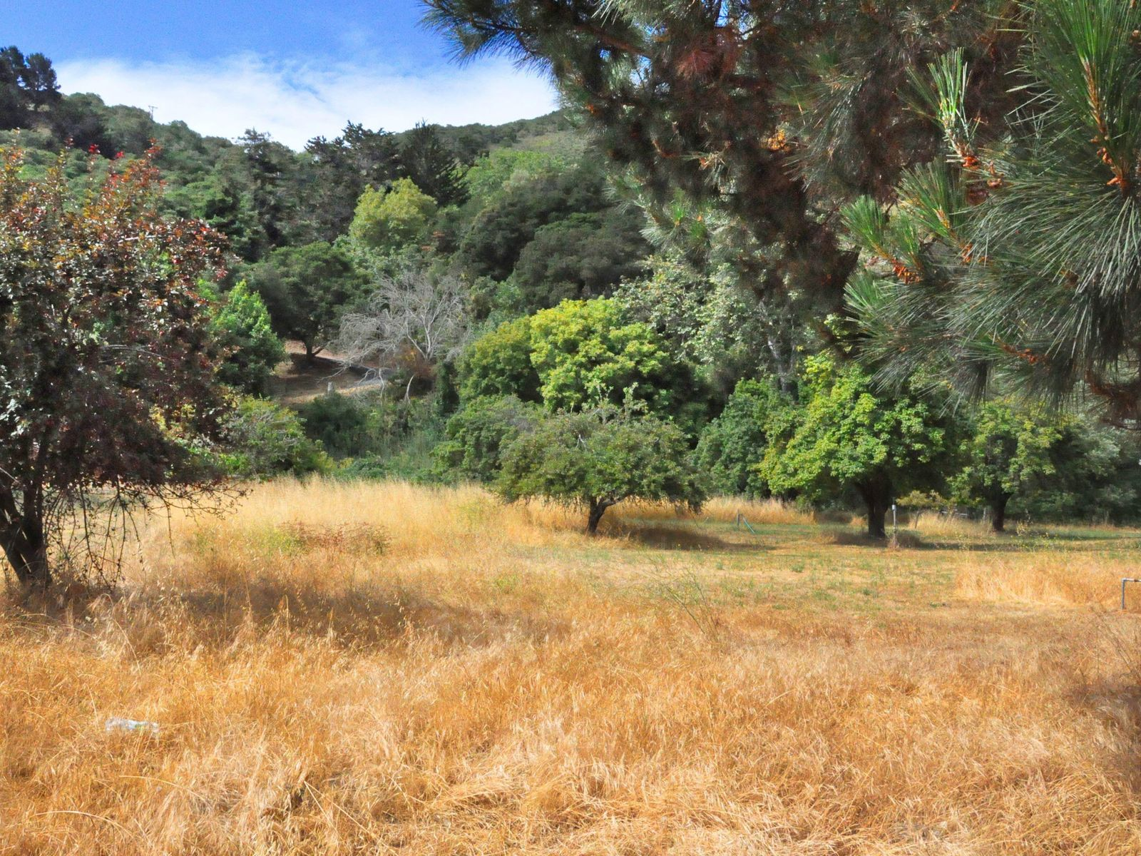 Great Potential in a Great Location, Carmel Valley CA Multiple Residences - Monterey Real Estate