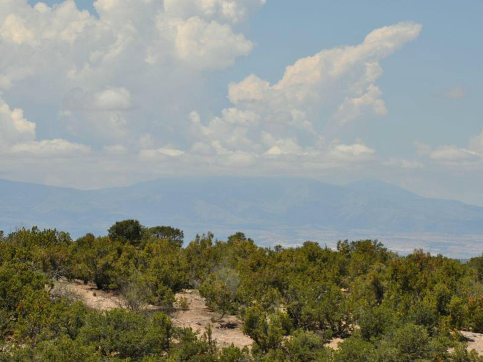 328 Pawprint Trail
