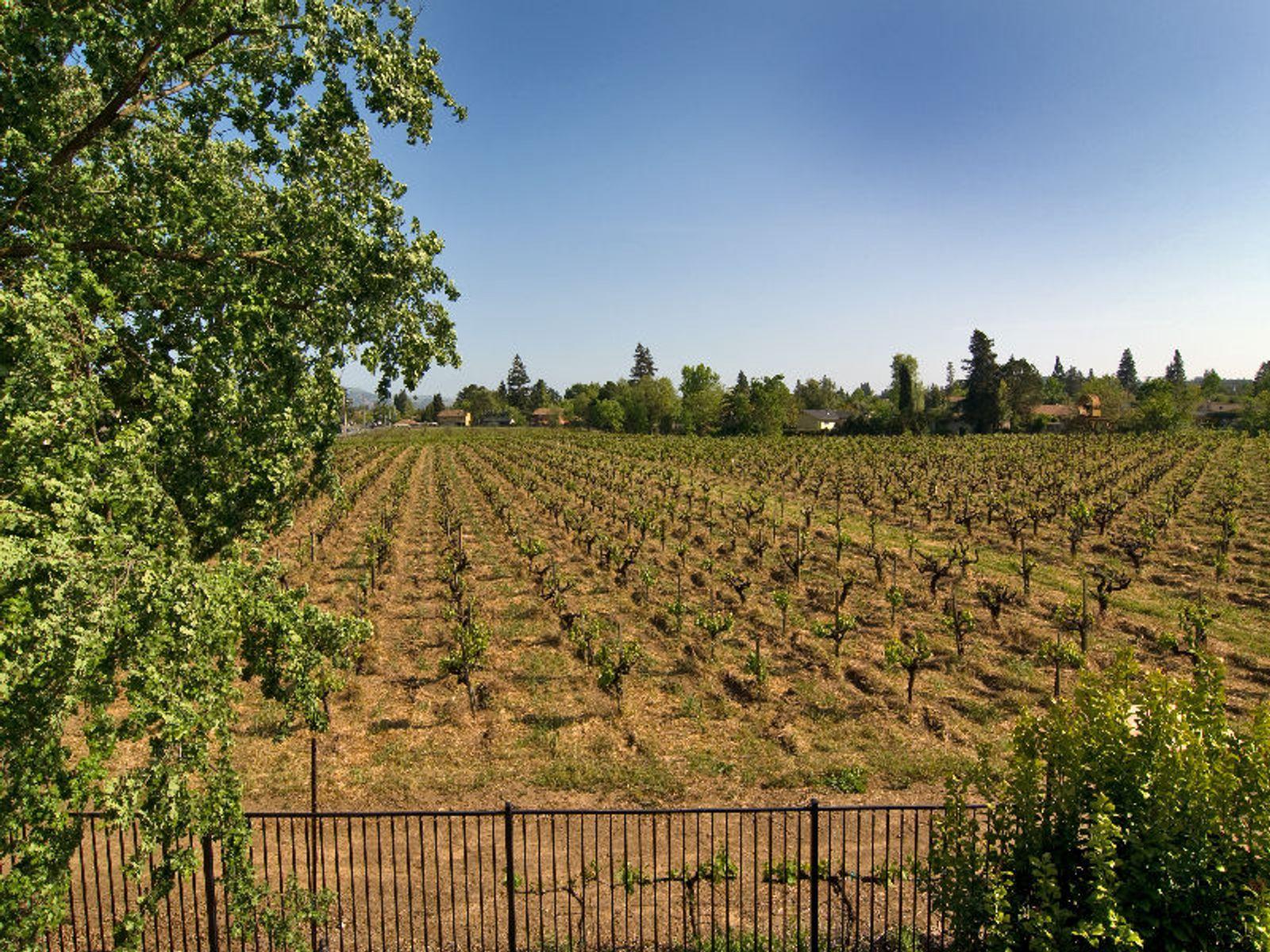 Vineyard Views in Napa