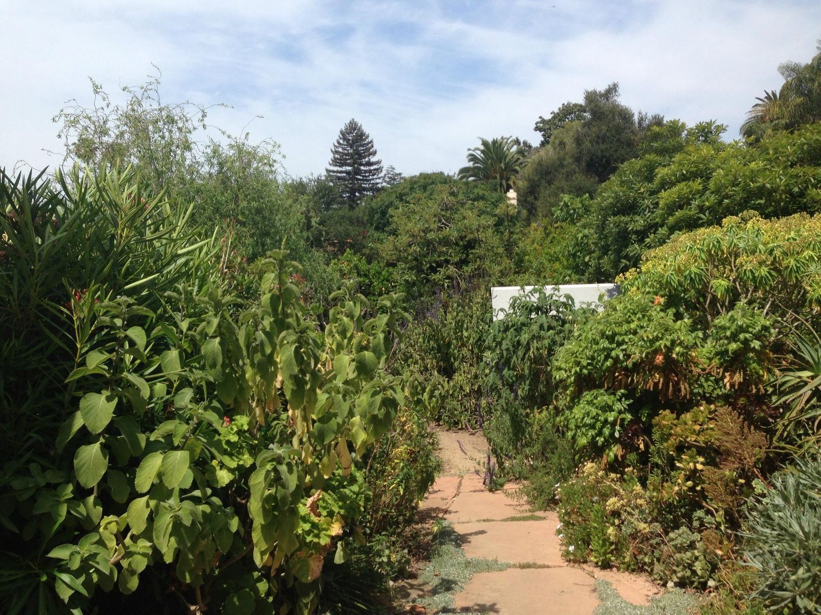 Yard with Pathway