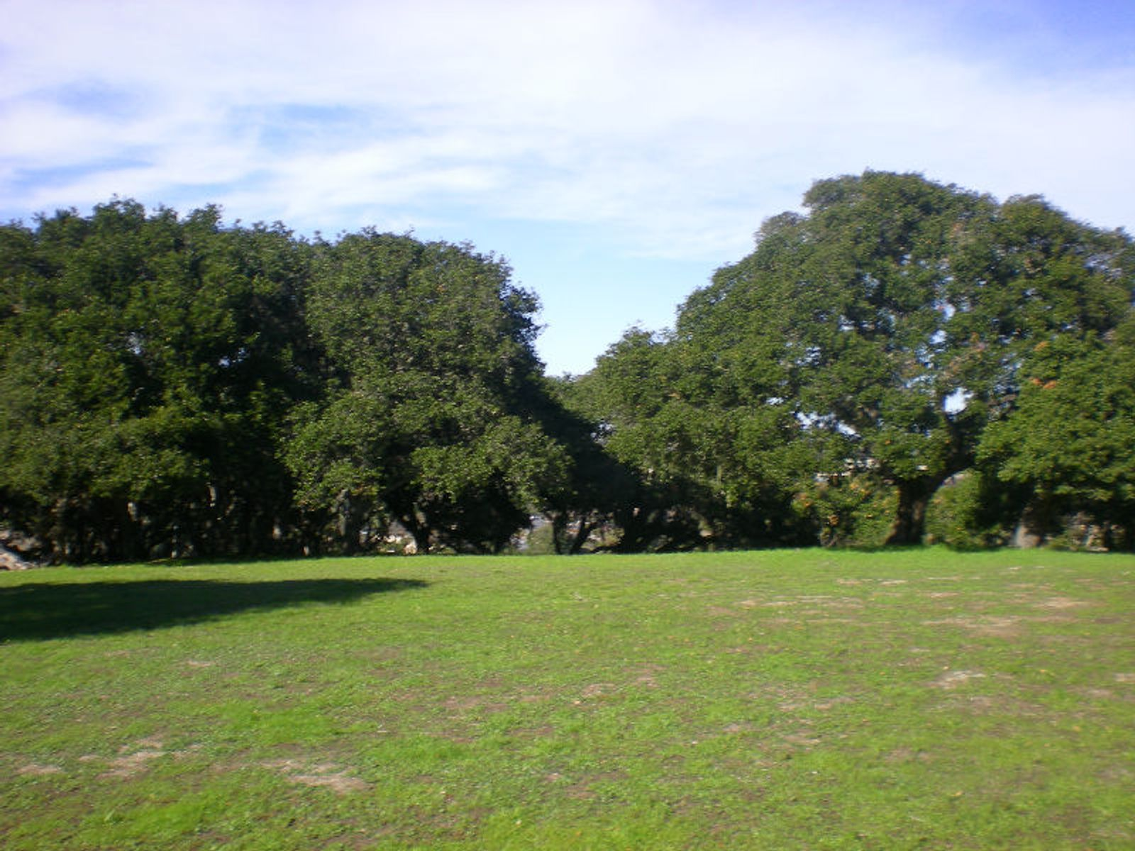A Gently Sloped Meadow Lot