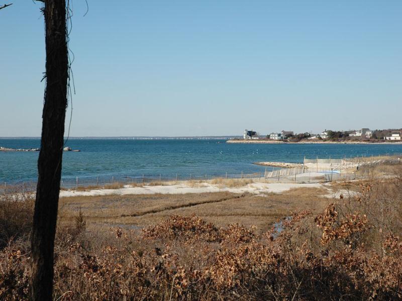 Wild Harbor Lot