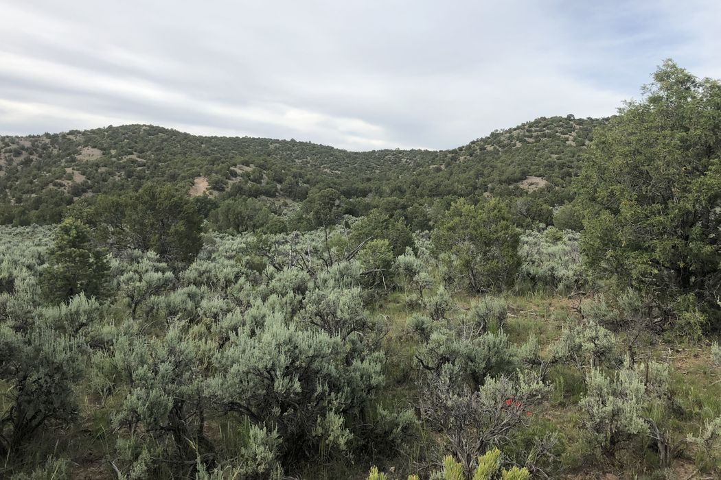 County Road 1301 Truchas, NM 87578