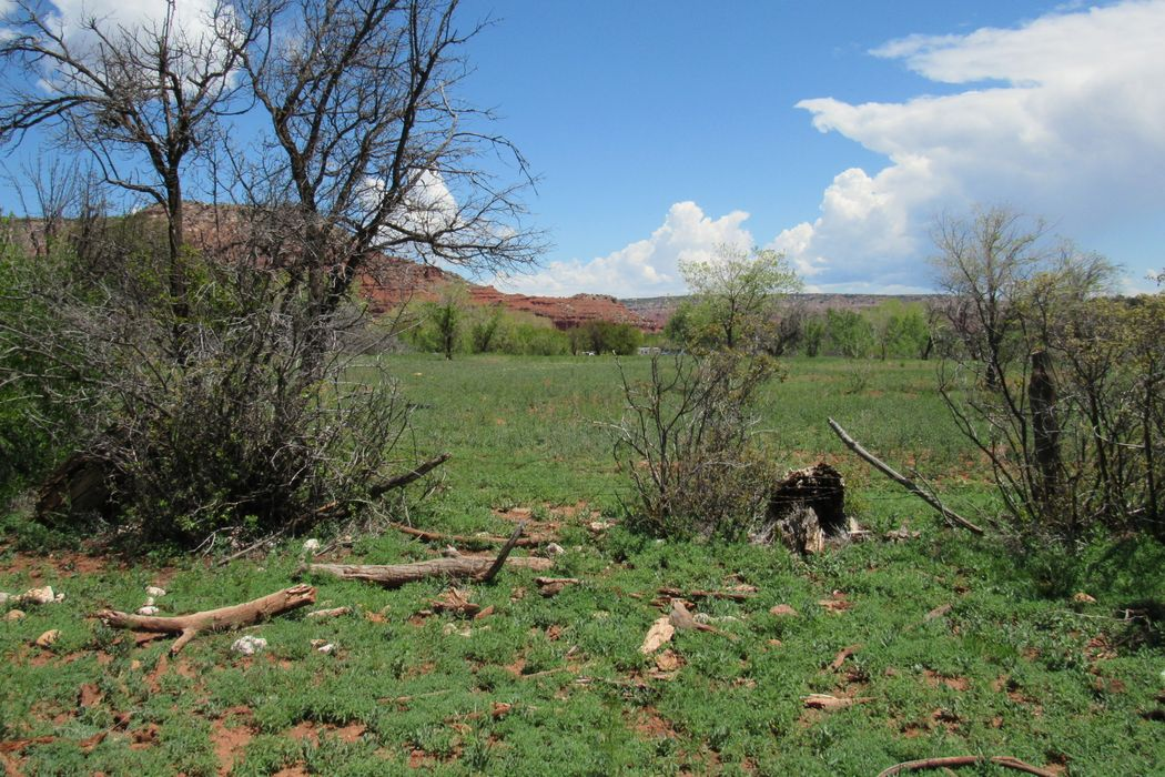 Montoya Ranch Cr 423 Coyote, NM 87012