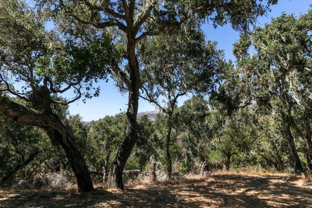 16 Sleepy Hollow Drive Carmel Valley, CA 93924
