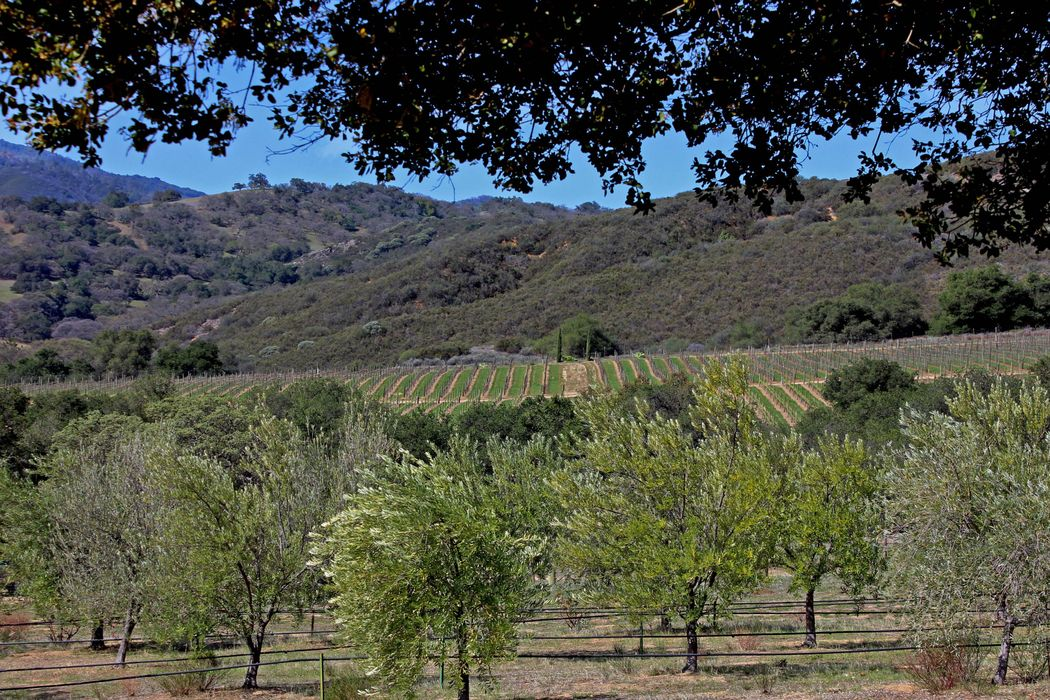 Sandy Creek Olive Ranch