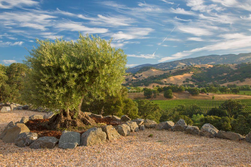 1501-1801 Highway 175 Hopland, CA 95449