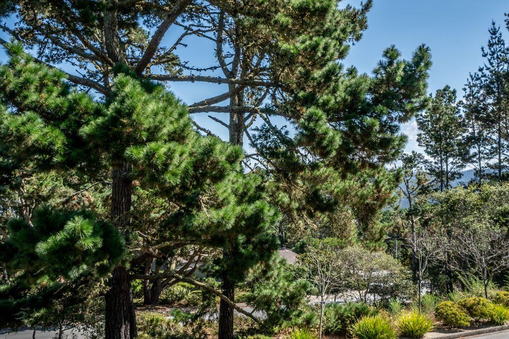 5 Skyline Crest Monterey, CA 93940