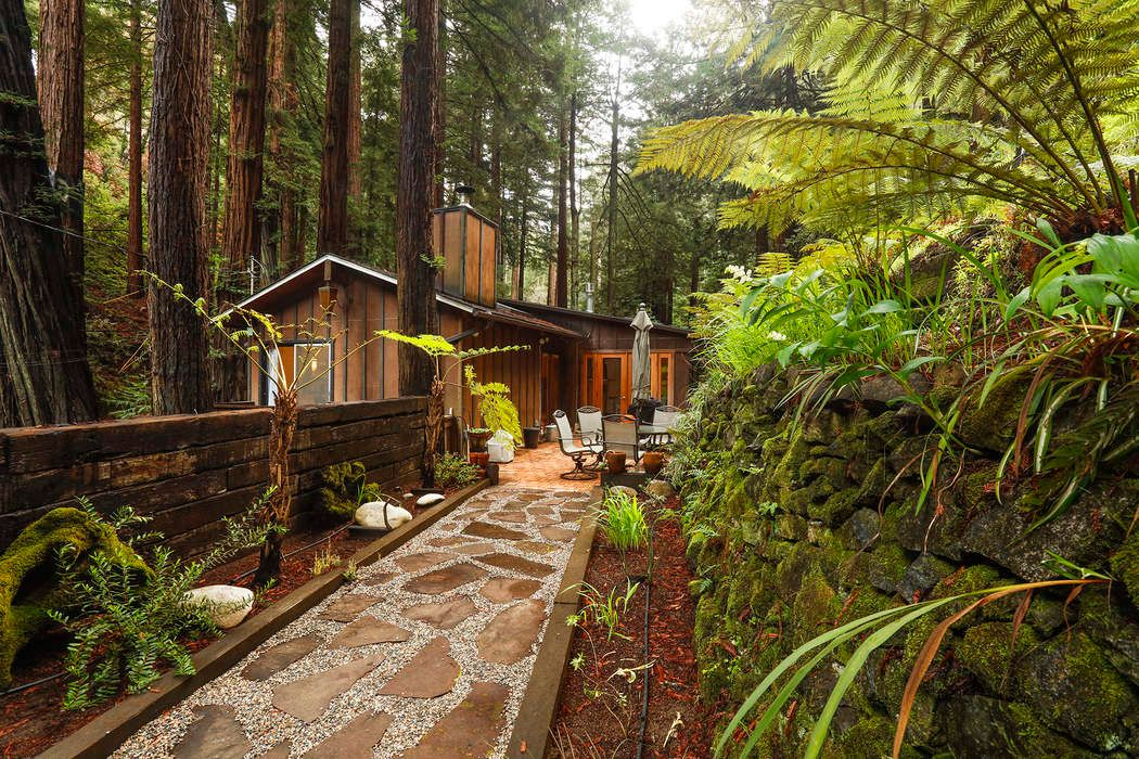 Charming cabin in a redwood forest.