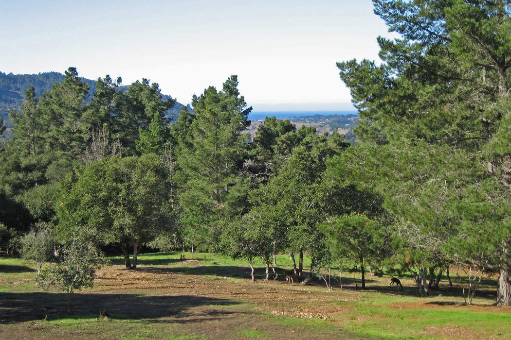 TEHAMA HOMESITE 4 - 5 GORGEOUS ACRES!