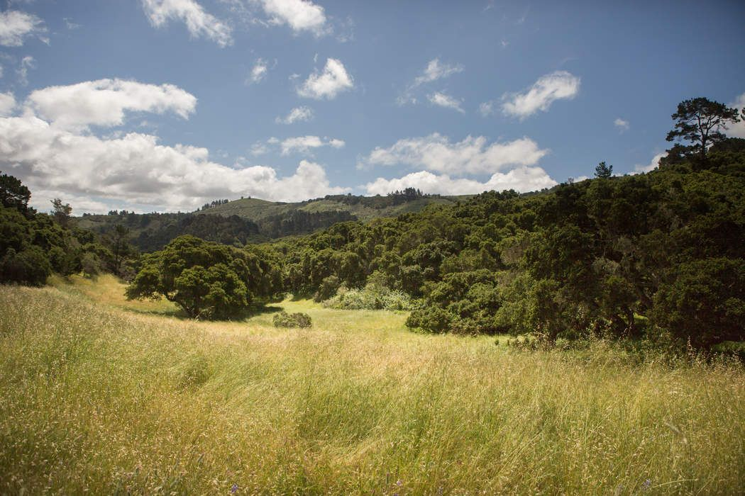 Homesite Opportunity in Quail Meadows