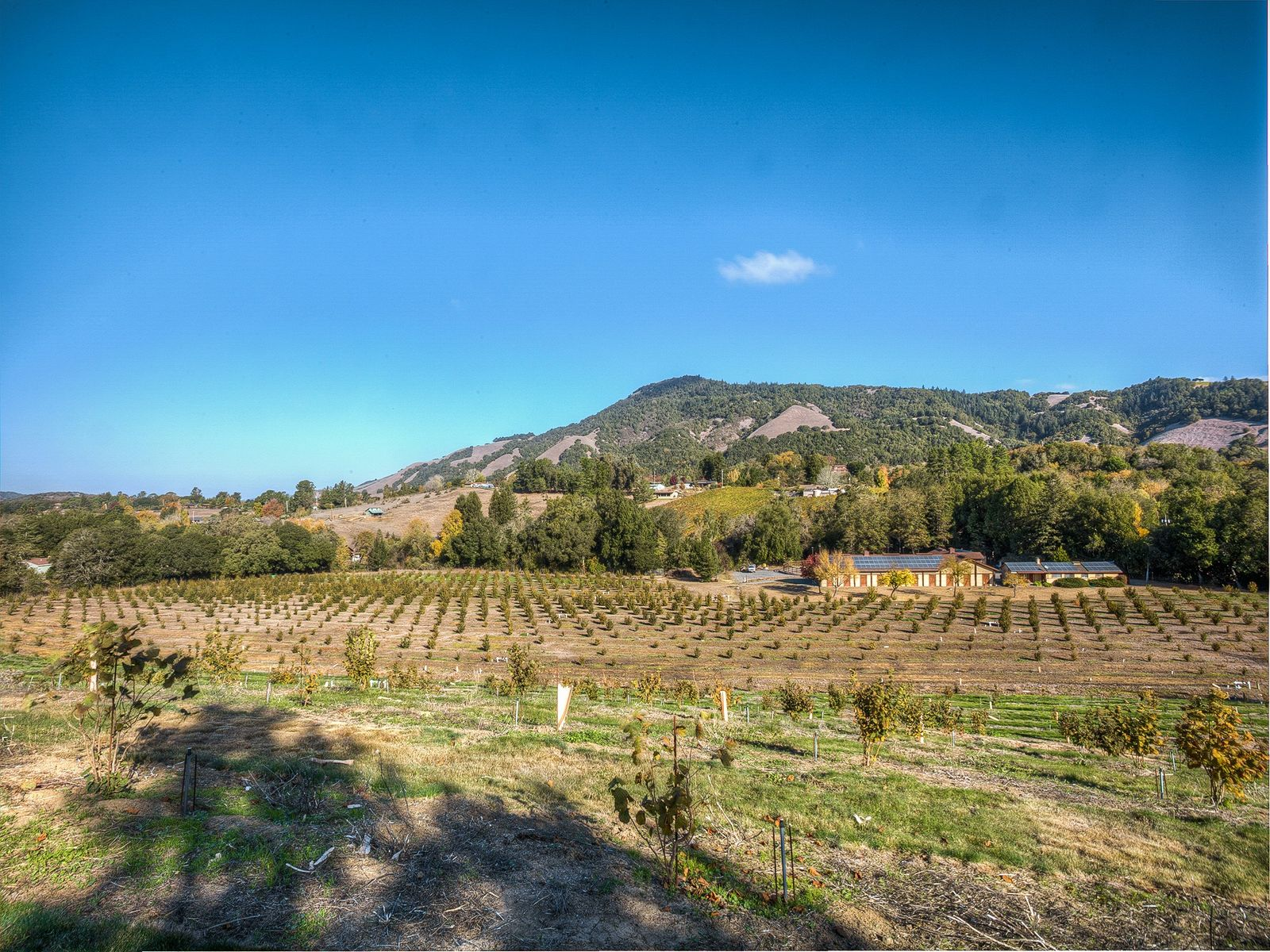 Creekside Setting, Santa Rosa CA Single Family Home - Sonoma - Napa Real Estate