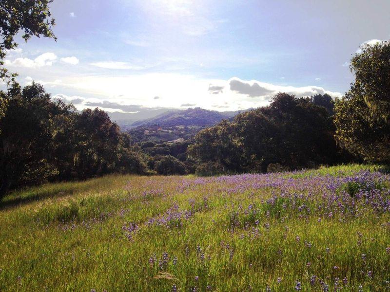 Picturesque 2.28 Acre Site in Monterra