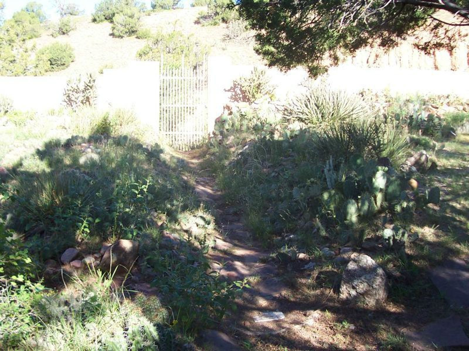 Cactus Garden in Fenced Back Yard