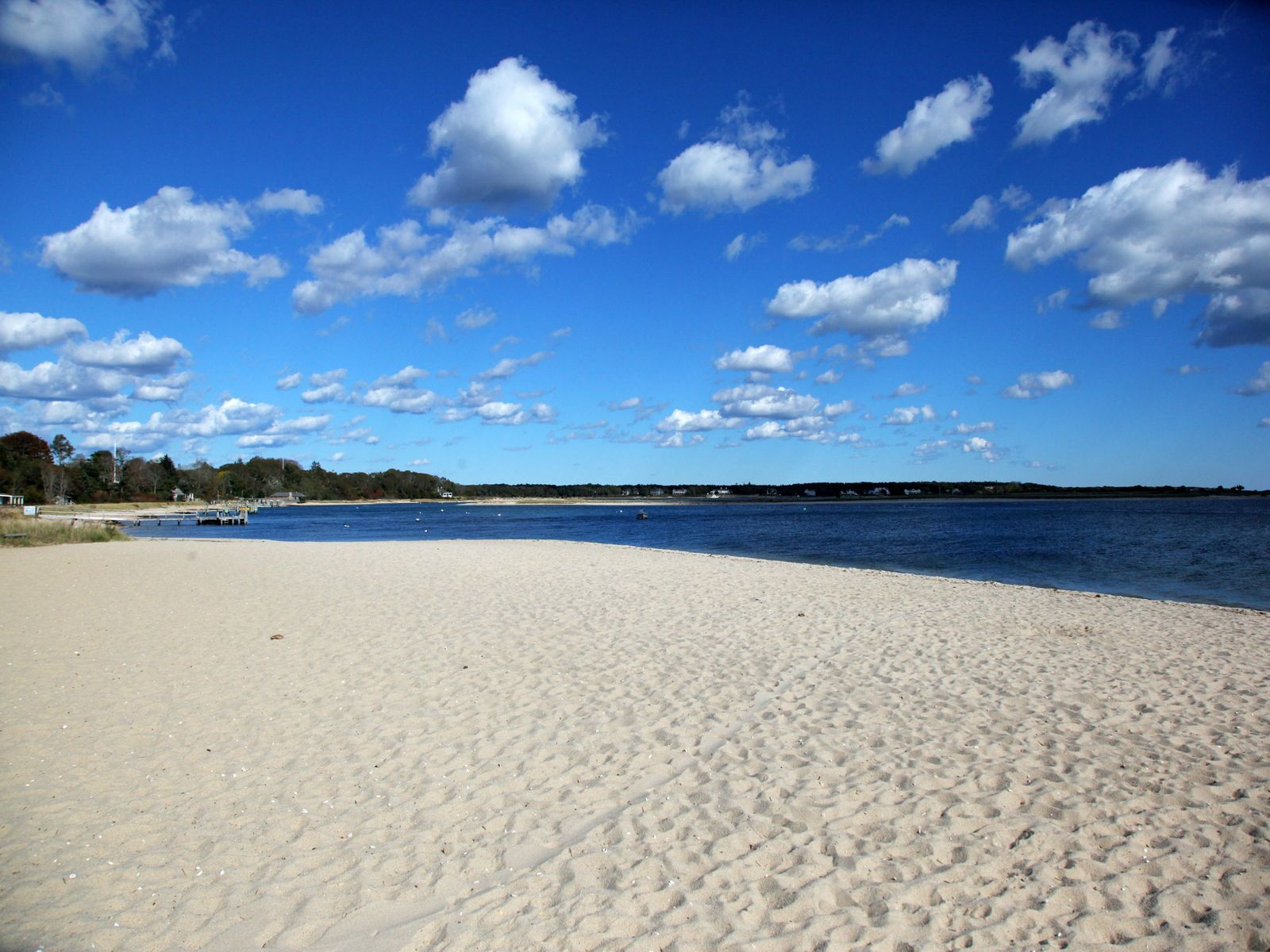 All About Cotuit