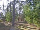 4+Acres+with+Bay+Views